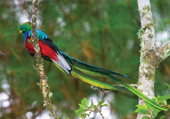 The Quetzal Bird – The Mixed Culture