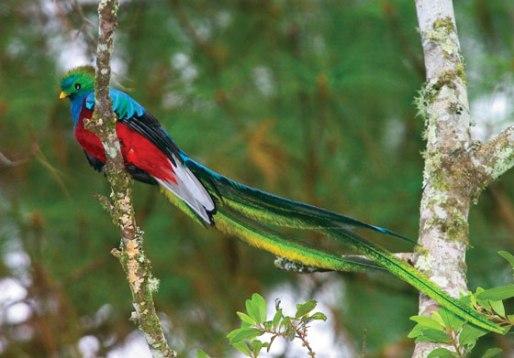 Quetzal bird (2)