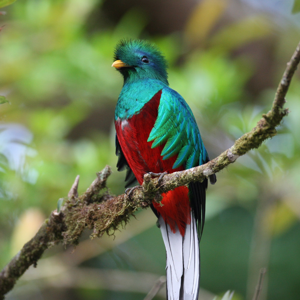 the quetzal The puerto quetzal cruise port is the starting point for cruisers looking to visit one of guatemala's most popular destinations, the unesco world heritage-listed city.