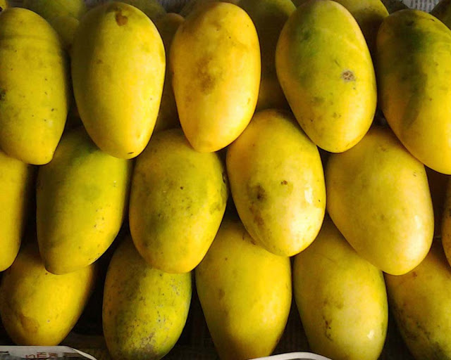 Best Western Mango House Resort Airlie Beach Tripadvisor